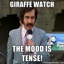giraffewatch